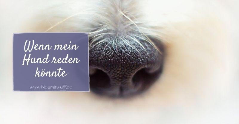 Read more about the article Wenn mein Hund reden könnte