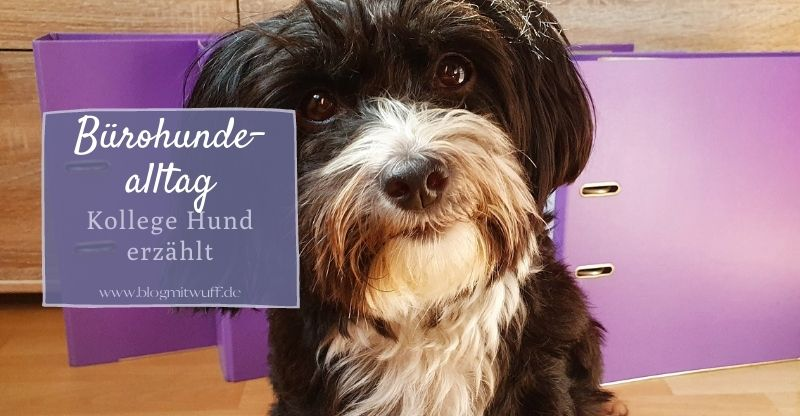 Read more about the article Bürohundealltag – Kollege Hund erzählt