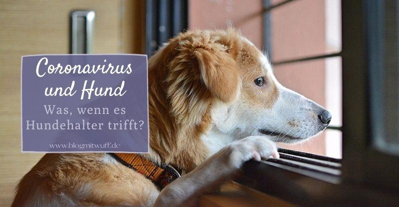 Read more about the article Coronavirus und Hund – Was, wenn es Hundehalter trifft?