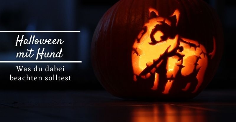 Read more about the article Halloween mit Hund