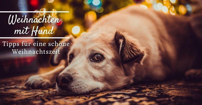 Read more about the article Tipps für Weihnachten mit Hund