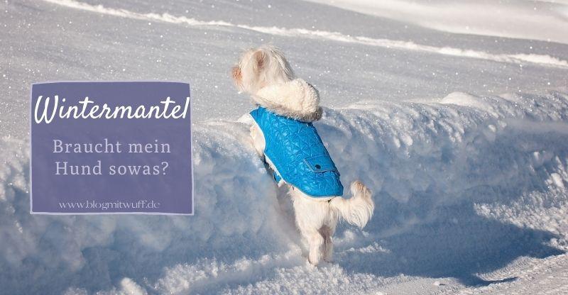 Read more about the article Braucht mein Hund einen Wintermantel?