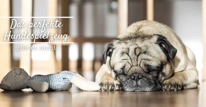 Read more about the article Das perfekte Hundespielzeug gibt es nicht