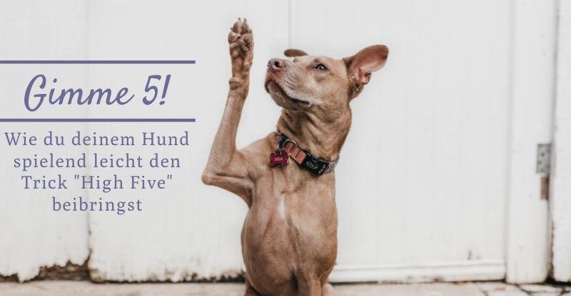 Read more about the article Gimme 5! Wie du deinem Hund spielend leicht den Trick High Five beibringst