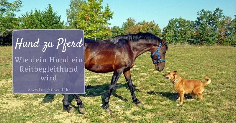 Read more about the article Hund zu Pferd – Wie dein Hund ein Reitbegleithund wird