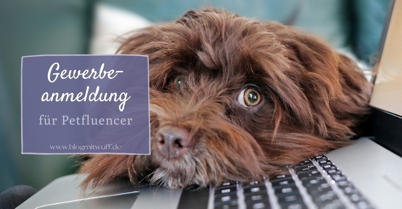 Read more about the article Gewerbeanmeldung – Notwendigkeit für Petfluencer
