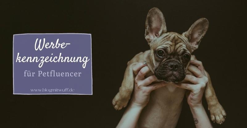 Read more about the article Werbekennzeichnung für Petfluencer