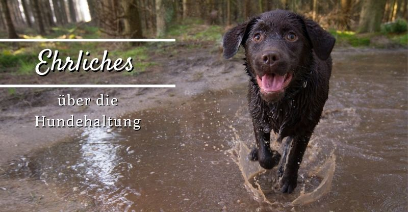 Read more about the article Ehrliches über die Hundehaltung