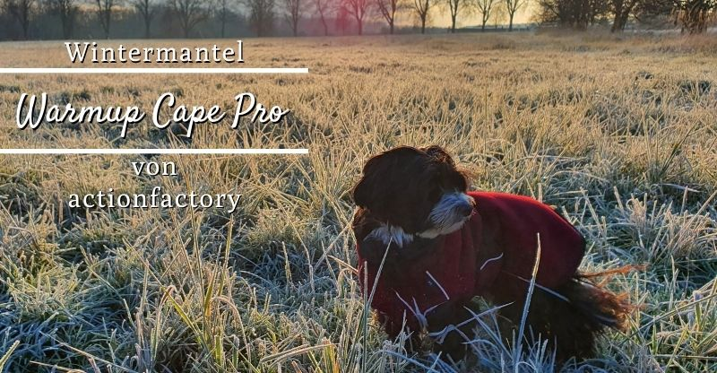 Read more about the article actionfactory Warmup Cape Pro – Wintermantel für Hunde