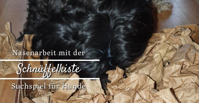 Read more about the article Schnüffelkiste – Suchspiel für Hunde