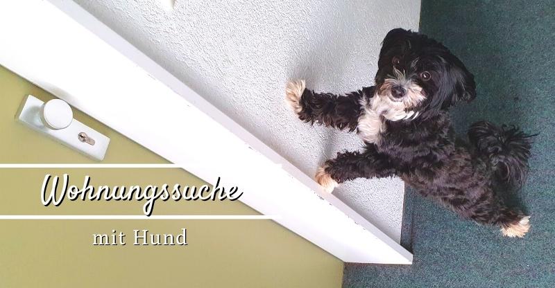 Read more about the article Tipps für die Wohnungssuche mit Hund