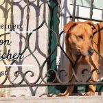 Balkon hundesicher gestalten