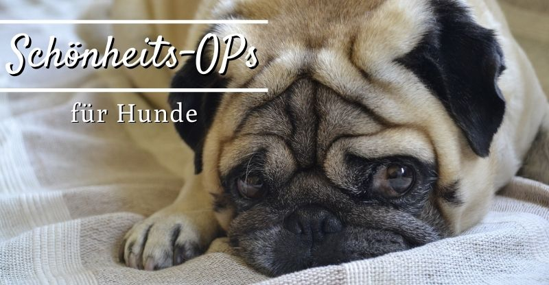 Read more about the article Schönheits-OPs für Hunde