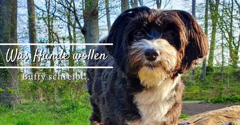 Read more about the article Was Hunde wollen – Buffy schreibt