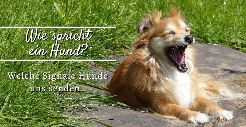 Read more about the article Wie spricht ein Hund? – Tierische Kommunikation für Anfänger