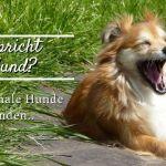 Wie spricht ein Hund? – Tierische Kommunikation für Anfänger