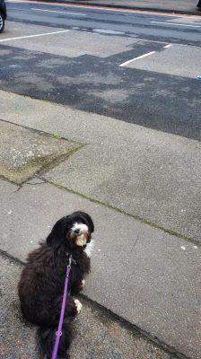 Hund in der City