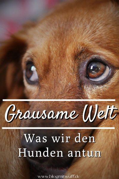 Grausame Welt - Was wir Hunden antun Pin