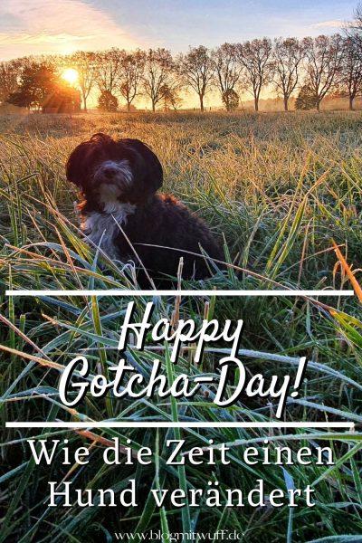 Happy Gotcha-Day Pin