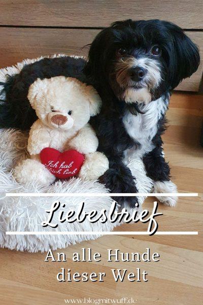 Liebesbrief an alle Hunde dieser Welt