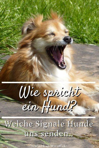 Pin Wie spricht ein Hund