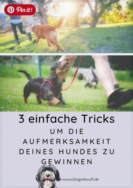 Pin it - 3 einfache Tricks um die Aufmerksamkeit deines Hundes zu gewinnen
