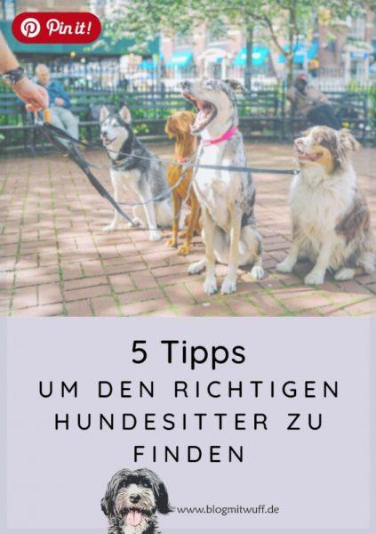 Pin it - 5 Tipps um den richtigen Hundesitter zu finden