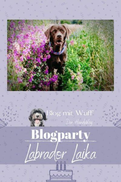 Pin zu Bloggeburtstag mit LabradorLaika