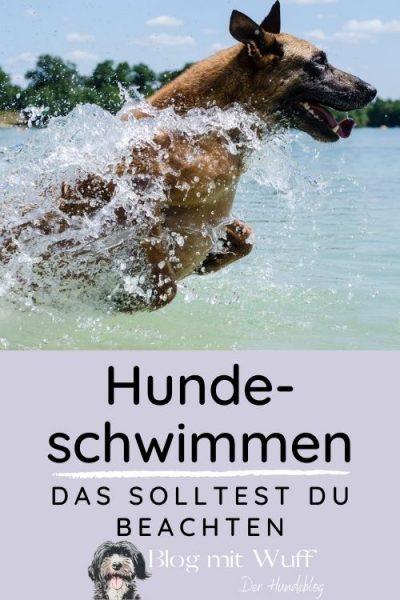 Pin zu Hundeschwimmen