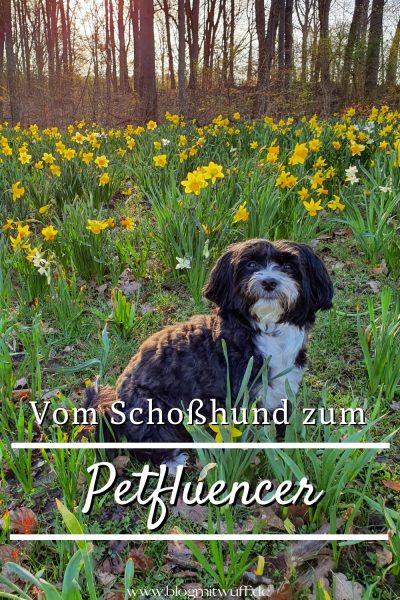 Vom Schoßhund zum Petfluencer