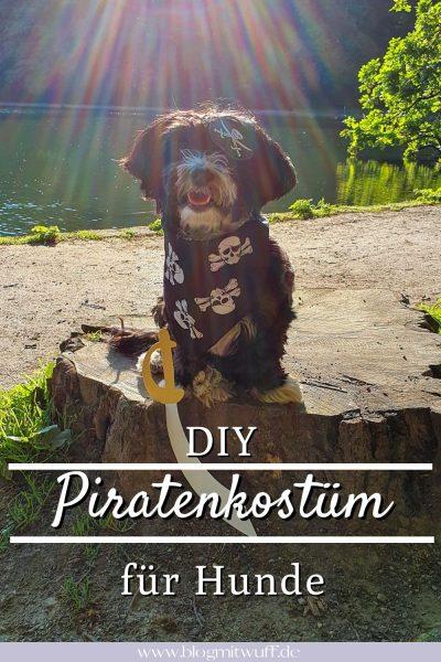 Piratenkostüm für Hunde Pin