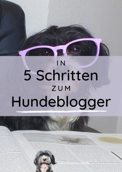 Titelbild zu In 5 Schritten zum Hundeblogger