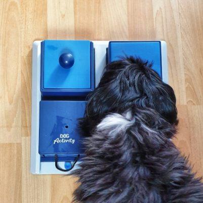 Trixie Activity Poker Box01