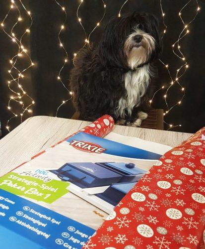 Hund hilft beim Geschenke einpacken