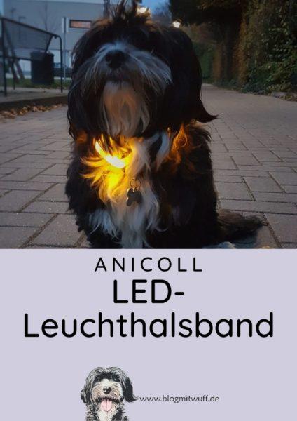 Pin zu Anicoll LED Leuchthalsband Produkttest
