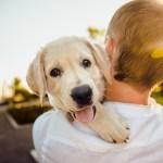 Tout savoir sur l'assurance responsabilité civile pour chien