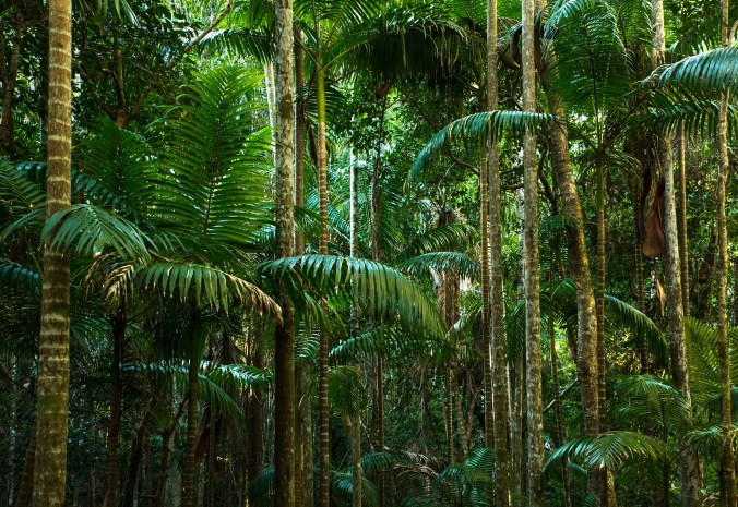 Jungle trees with thick green foliage