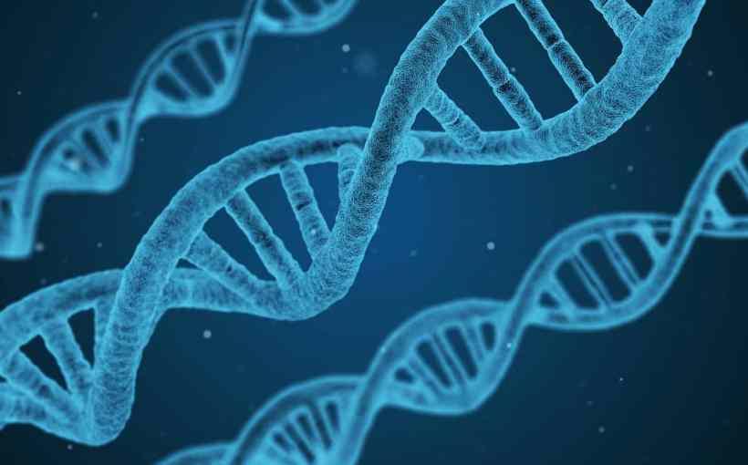 Dna Genoma
