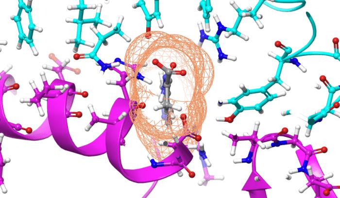 Il composto, mostrato in grigio, è stato calcolato per legarsi alla proteina di SARS-CoV-2, mostrata in ciano, per impedirgli di agganciarsi al recettore dell'enzima 2 di conversione dell'angiotensina umana o ACE2, mostrato in viola.