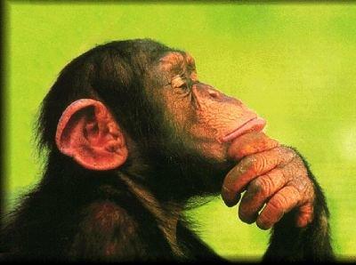 https://i2.wp.com/www.blogscienze.com/wp-content/uploads/2007/12/matematica-neuroscienza-operazioni-scimmie-studenti-duke-university.jpg