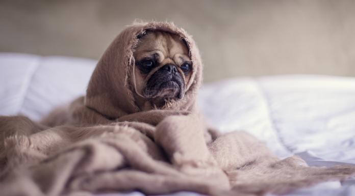 Hond ziek