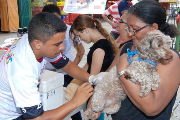Campanha de vacinação animal inicia nesta sexta-feira (4) em São Luís
