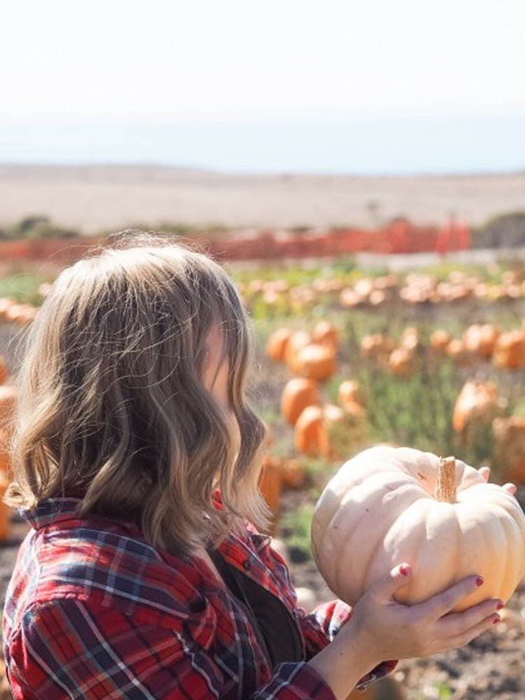 Half Moon Bay Pumpkin Patch