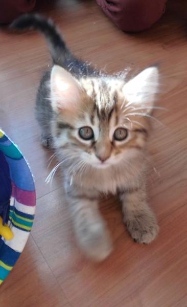kitten-mittens-8-weken-2
