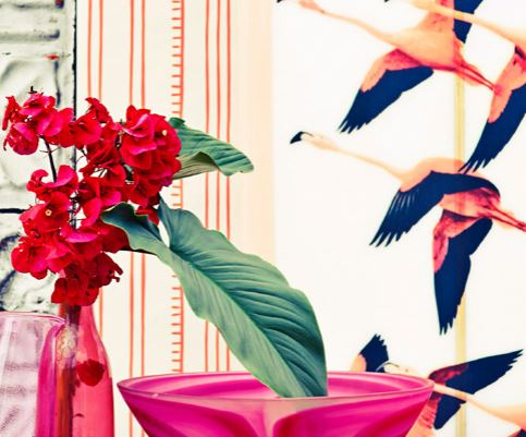 flamingo miami trend
