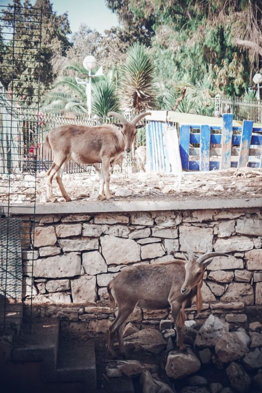 agadir zoo morocco animals