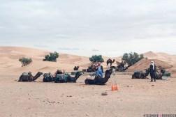 camels morocco desert dunes sand