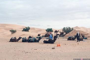 merzouga-camels-desertjpg
