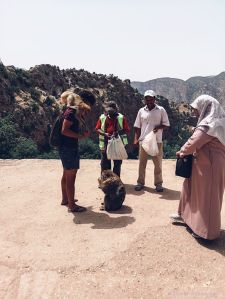 monkey, forest, morocco, people, ouzoud