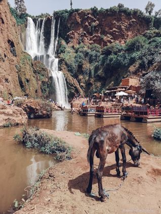 ouzoud, waterfall, morocco, mountain, view, donkey
